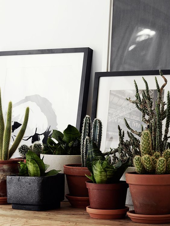 cactuses_in_the_interior_22