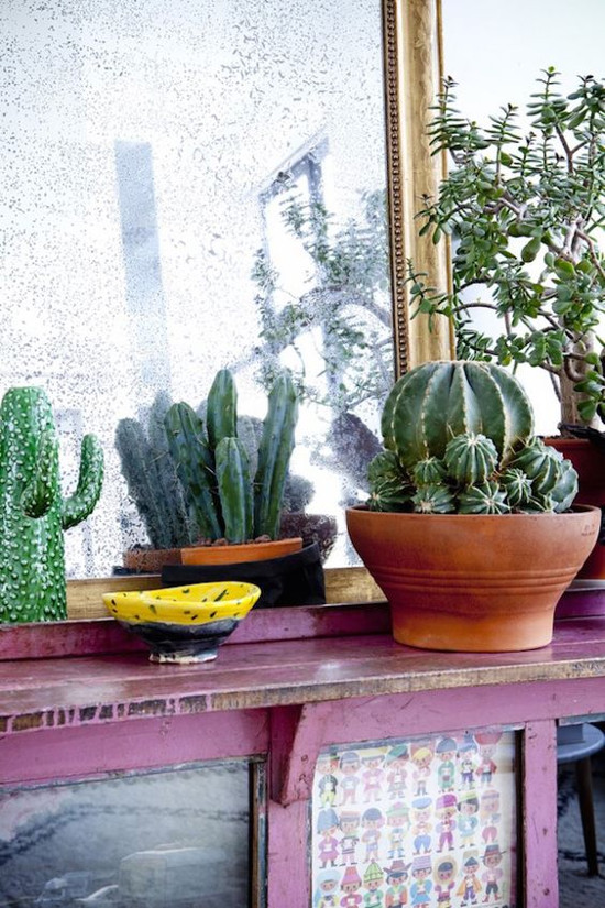 cactuses_in_the_interior_23