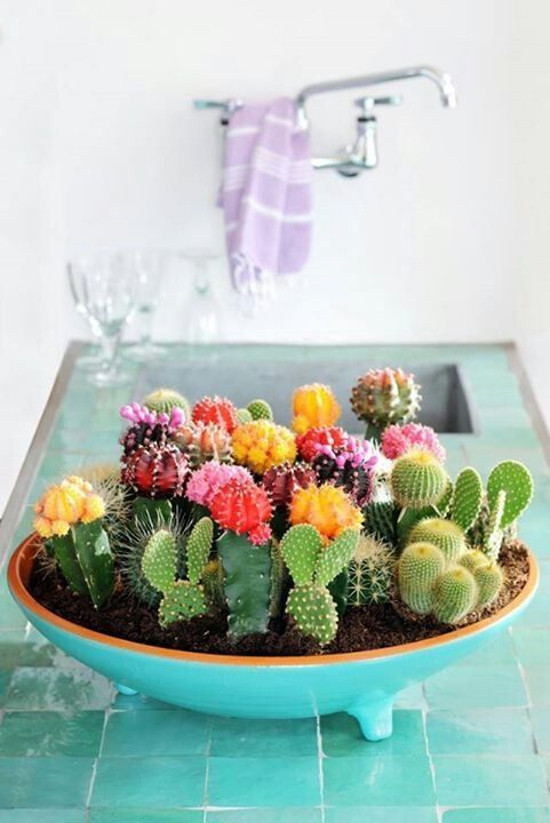 cactuses_in_the_interior_3